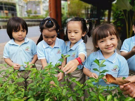 Little Oak Tree, Bukit Jelutong, Shah Alam