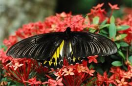 Image source : http://www.butterfly-insect...