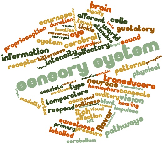 sensory integration 4