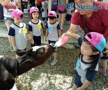Mortimer Holiday Programme - A Farm Experience