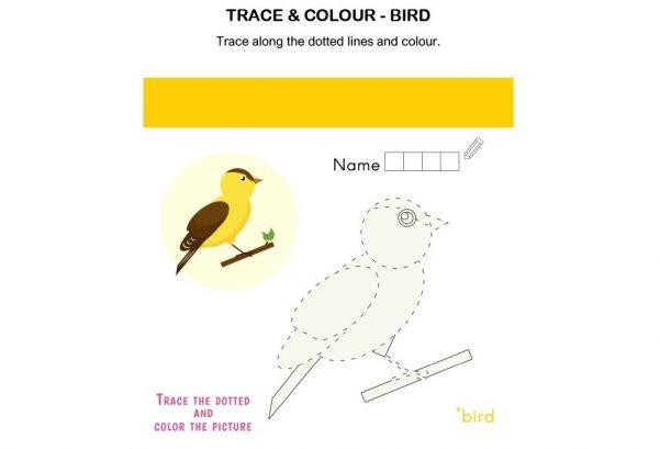 ART - Trace and Colour Bird
