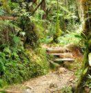 Mesilau Nature Resort in Sabah