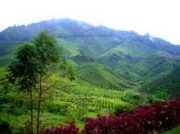 Sungai Palas Boh Tea Plantation